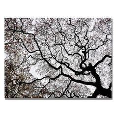 Trademark Art 'Japanese Maple Spring Abstract II' by Kurt Shaffer Framed Photographic Print on Wrapped Canvas Size: Artist Canvas, Abstract Canvas, Canvas Wall Art, Canvas Prints, Tree Canvas, Abstract Print, Japanese Maple, Landscape Prints, New Wall