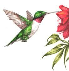 how to draw a realistic hummingbird