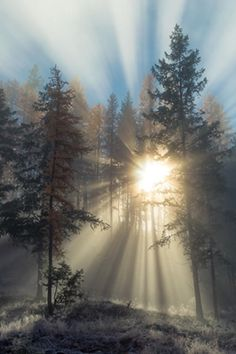 Sunrise... rays streaming through the trees