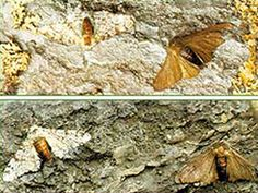 Sanayi Devrimi kelebekleri masalı