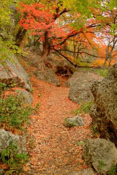 5. Lost Maples State Natural Area (Vanderpool)