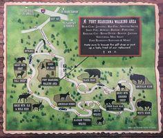 bearizona wildlife park map