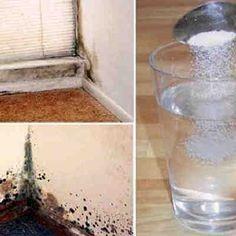 Sólo debes esparcir esta mezcla para eliminar el moho de forma segura, natural y permanente de tu hogar
