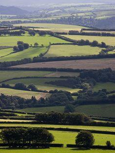 Somerset Fields.
