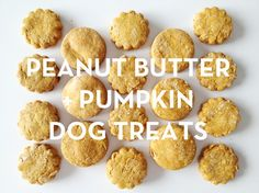 Need a quick treat to spoil your pooch? Try Peanut Butter & Pumpkin Dog Treats from Design Crush! With only 4 ingredients, these treats are sure to become a household favorite! #dogtreats #dogs #dogtreatrecipes #recipes #treats #mydog #designcrush