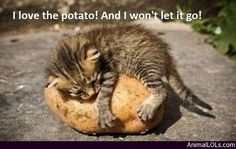love the potato