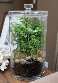 Learn How To Create Your Own Terrarium Using A Glass Canister, Moss, Fern, River Rocks And More. Directions And Supplies List At Terrarium Diy, How To Make Terrariums, Glass Terrarium, Indoor Garden, Indoor Plants, Plant In Glass, Glass Canisters, Garden Projects, Garden Ideas
