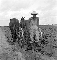 June 1937. Ex-tenant farmer, now a day laborer on a large cotton farm near Corsicana, Texas. Dorothea Lange LC-USF34-017231-E