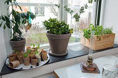 Window with plants Indoor Plants, Planting Flowers, Planter Pots, Flora, Window, Herbs, Cozy, Interior Design, Decor