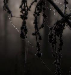 dark forest diamonds