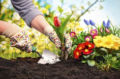 """See why, """"Why Gardening is Good for Your Health"""", in our newest blog! #Gardening #GreenThumb #GreenPrints #Health #Wellness #GoOutside #Nature"""