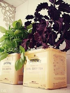 I love Twinings tins for planters by megan