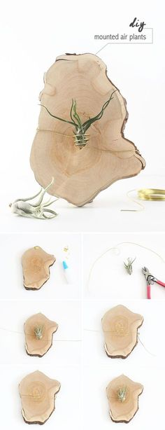 Another idea for your indoor garden | DunnDIY.com | #inspiration