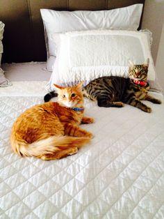 Love cats...