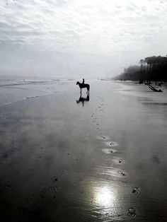 The Horse Rider's Journal One day…. go horseback riding on a beach. All The Pretty Horses, Beautiful Horses, All About Horses, Horse Photography, Dark Horse, Wild Horses, Horseback Riding, Equestrian, Scream