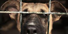 Create and Enforce Animal Cruelty Registry in Iowa