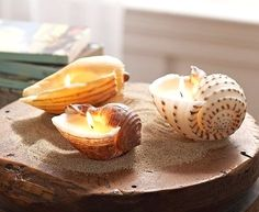 How to make seashell candles in a nutshell: Take some deep and straight standing shells, fill them with melted wax, place wicks with holders into the bottoms and let them dry. You can pick up a block of wax and a bag of wicks at your local craft store. Also consider recycling some of your candles! I always have quite a bit of wax leftover from my pillar candles. The deeper the seashells the longer your seashell candles will burn.