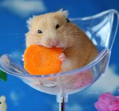 Baby Animals Pictures, Funny Animal Photos, Animals And Pets, Funny Animals, Cute Animals, Beautiful Creatures, Animals Beautiful, Hamster Pics, Funny Hamsters