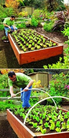 Why You Need to Add Raised Beds to Your Garden by imad karrari