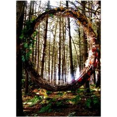 birch willow ❤ liked on Polyvore featuring backgrounds, pictures, fairytale, photos, forest and scenery