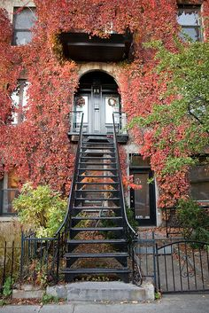 9 October 2008 Stairs leading up to an apartment building with an archway in the Plateau Montreal. The outside walls have orange and yellow vines growing up them. Montreal, Quebec, Canada.