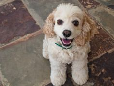 Tips on Keeping Your Dog's Mind Agile