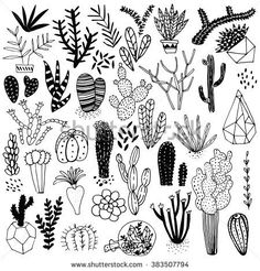 Black and white hand drawn cactus and succulents. Vector set with succulents flowers, concrete pots and glass terrariums. Vector illustration.