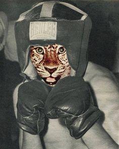 "Polubienia: 893, komentarze: 9 – Sammy Slabbinck (@sammyslabbinck) na Instagramie: ""El Boxeador / handcut #collageart#art#illustration#vintage#boxing"""