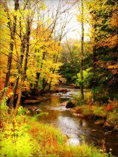 Allegany State Park, New York; photo by .Mark K.