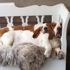 Love those long ears! #DogLovers