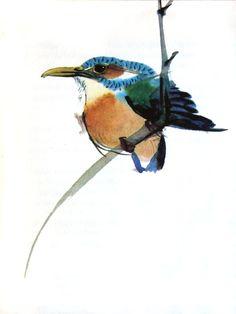 Animalarium: Halcyon Days, Kingfisher