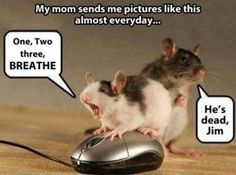 Dump A Day funny mouse pictures - Dump A Day