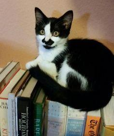 Oreo is a bit of a bookworm. pic.twitter.com/yrLAkLfFZY