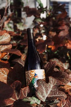Kindeli 'Invernio' red blend on some likeminded leaves Wine Leaves, Organic Wine, Pinot Gris, Wines, Autumn, Bottle, Red, Fall, Flask