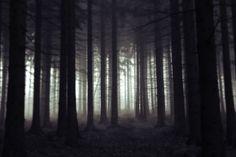 Scary forest by Jan Srněnský, via 500px