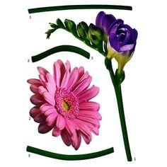 Brewster FS18887 Variable Sized - Fiore - Self-Adhesive Repositionable Vinyl Wall Decal - Set of 5