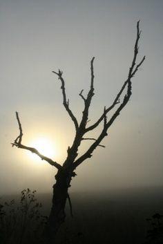 foggy sunrise at Umbagog National wildlife refudge in N. Bare Tree, Sunsets, Nature Photography, Sunrise, Wildlife, Celestial, Awesome, Outdoor, Outdoors