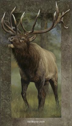 Elk...Val Warner                                                                                                                                                                                 More