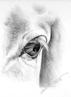 drawing by Sheona Hamilton-Grant Wisdom in the eye of a horse.   Http:// sendingjoy.workpress.com