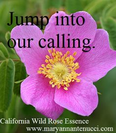 California wild rose essence reestablishes the connection with what makes us tick, what gives us purpose and meaning. This remedy helps us to jump into our calling. California wild rose is considered the enthusiasm essence, the missing link for engaging in life and her bounty.