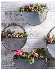 These rounded, half-circle shape wall planter gives plants a lofty place to hang out. They are made of galvanized metal for a rustic look, it can be used indoors or out for a fresh approach to displaying your greenery. Hanging Air Plants, Hanging Vases, Indoor Plants, Wall Vases, Indoor Outdoor, Hanging Gardens, Small Plants, Indoor Gardening, Succulent Wall Planter