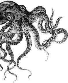 octopus tattoo sketch design let's get kraken Octopus Tattoo Design, Octopus Tattoos, Tattoo Designs, Squid Tattoo, Octopus Sketch, Octopus Art, Octopus Drawing, Octopus Illustration, Tattoos Geometric