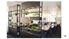 Office divider and plant stands timber and steel Office Dividers, Plant Stands, Space Furniture, Platform, Steel, Spaces, Studio, Room, Ideas