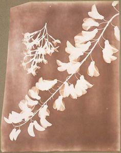 William Henry Fox Talbot cria o primeiro fotograma e negativo reprodutível da história da fotografia ao desenvolver o primeiro herbário fotográfico.