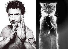 【目の保養】イケメンと猫の画像を比較 しかしイケメンも猫には敵わない様子 - Togetterまとめ