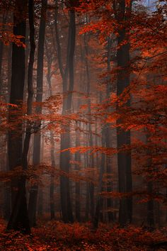 Spiritual Wood by Philippe Sainte Laudy ~ Join my Facebook group @ https://www.facebook.com/groups/203202106526027/