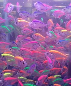 fish, neon, and colors image Rainbow Aesthetic, Aesthetic Collage, Purple Aesthetic, Goth Aesthetic, Bedroom Wall Collage, Photo Wall Collage, Picture Wall, Aesthetic Pastel Wallpaper, Aesthetic Backgrounds
