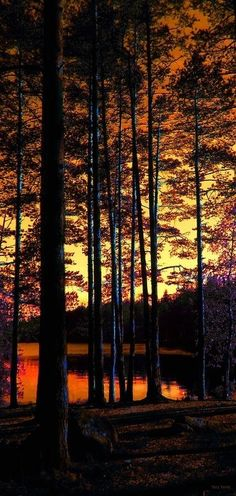 Dusk in the red wood forest~