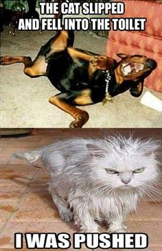 That was a cat accident
