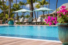 Boutique Beachfront Resorts on Eagle Beach, Aruba - Manchebo Beach Resort & Spa Best All Inclusive Resorts, Beach Resorts, Visit Aruba, Southern Caribbean, Clean Beach, Outdoor Spa, Caribbean Vacations, Us Beaches, Cool Pools